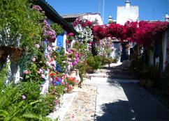 Foto 2 Andalusia