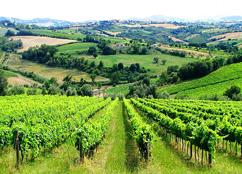 Foto 2 Romagna