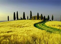 Foto 2 Toscana